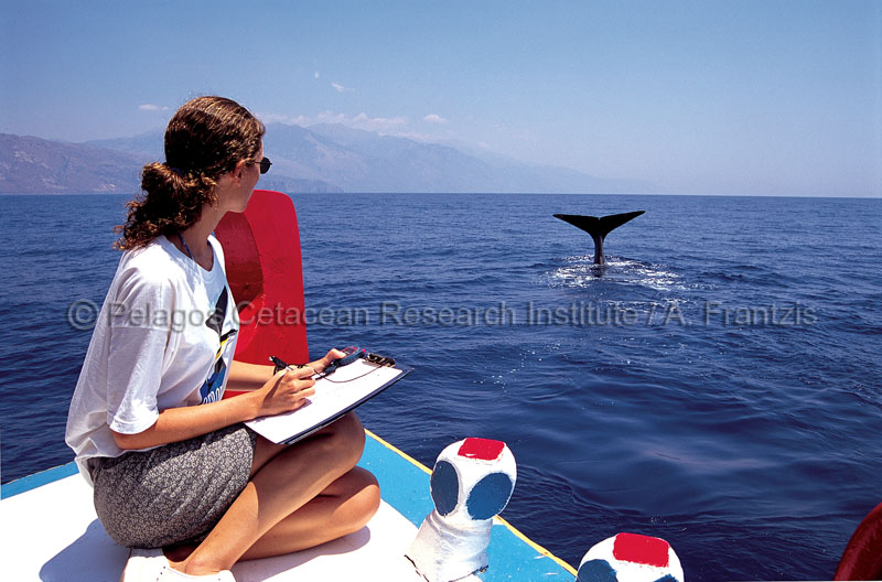 Studying sperm whales